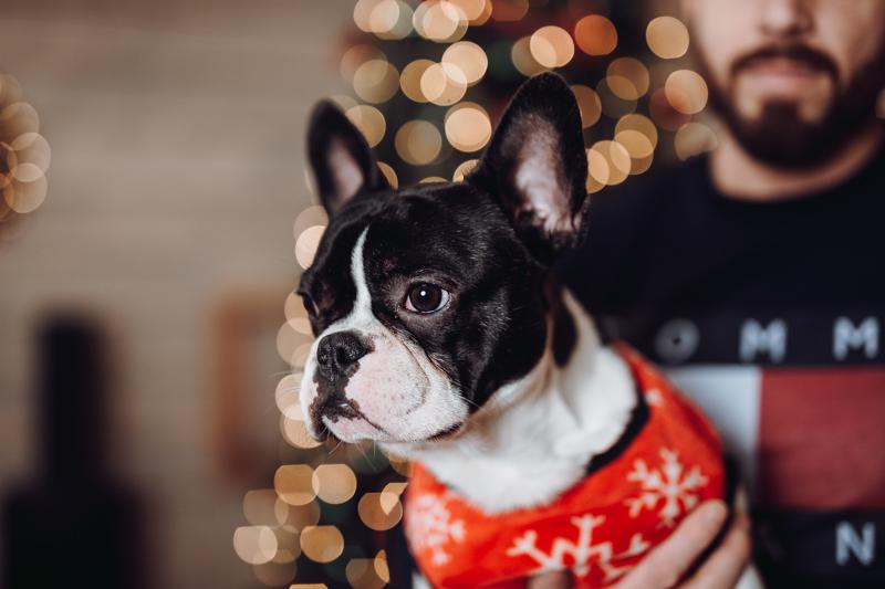 Karácsonyi kutyás fotózás